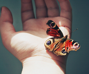 butterfly, hand, and animal image