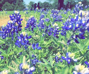 summer, Texas, and bluebonnets image