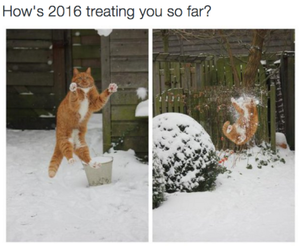 funny, 2016, and cat image