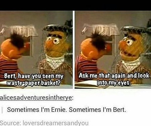 funny, tumblr, and bert image