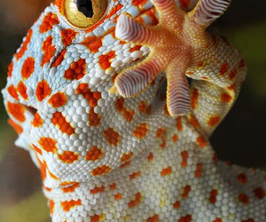 Animales and reptile image