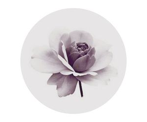 flowers, lilac, and mauve image