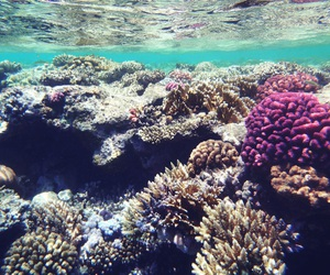 coral, ocean, and sea image