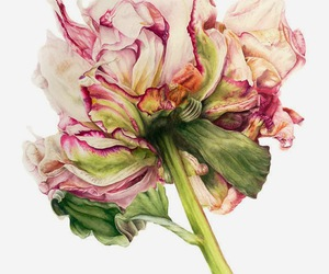 flowers, art, and peony image