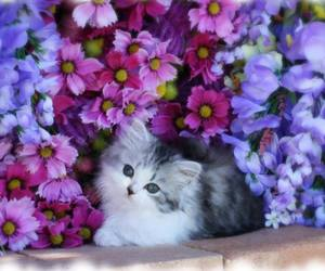 flowers, cat, and kitten image