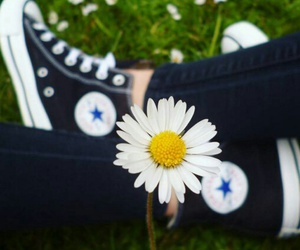 converse and flower image