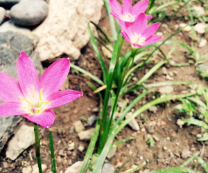 flower, pink, and wild image