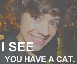 one direction, Harry Styles, and cat image