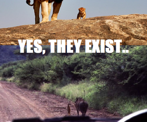 lion king, lion, and the lion king image