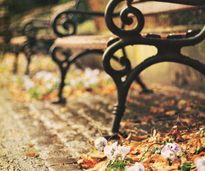 photography, autumn, and flowers image