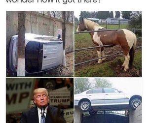 funny, donald trump, and fuck trump image