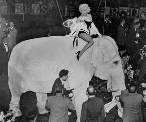 black and white, circus, and elephant image