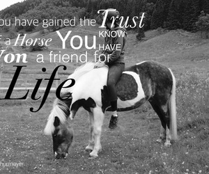 equestrian, for, and friend image
