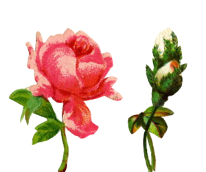 edit, flower, and overlay image