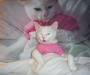 cat, funny, and pink image