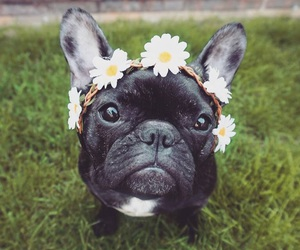 black, dog, and flowers image