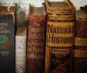book, vintage, and history image