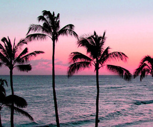 high, palm, and pink image