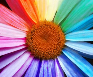 flowers, color, and rainbow image