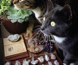 cat, crystal, and witch image