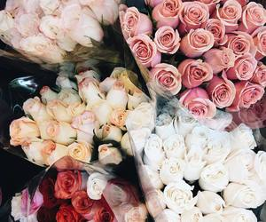 beautiful, flower, and rose image