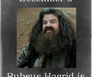 birthday, rubeus hagrid, and harry potter image