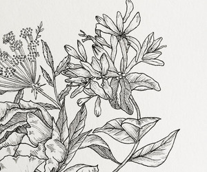 alternative, draw, and flowers image