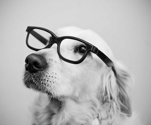 dog, glasses, and black and white image