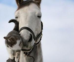kitty n horsie image