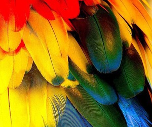 feather, asia, and bali image