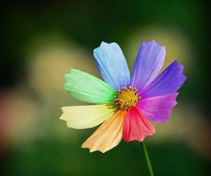 flowers, rainbow, and colorful image