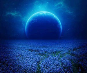 flowers, moon, and blue image