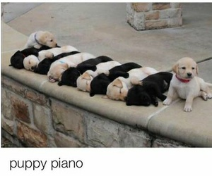 piano, puppy, and cute image