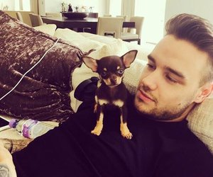 liam payne, one direction, and dog image
