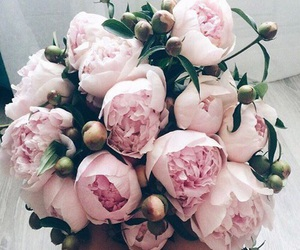 flowers, inspiration, and peony image