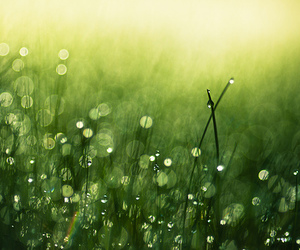 grass, green, and photography image