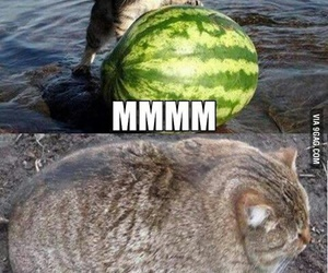 cat and watermelon image