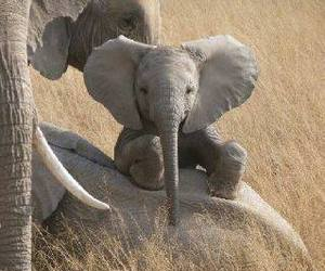 baby animals, elephants, and cute animals image
