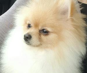sweetdogs image