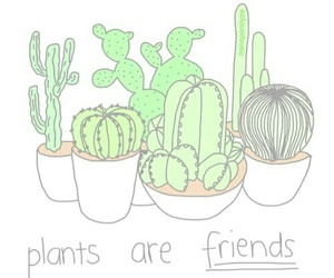 plants, cactus, and friends image