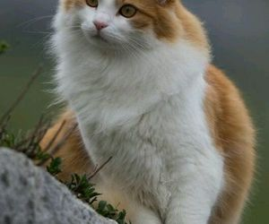 animals, cats, and beautiful image