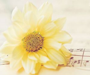 flowers, music, and yellow image