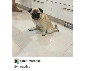 funny, tumblr, and dog image