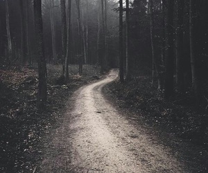 alone, forest, and woods image