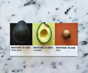 color, pantone, and aguacate image