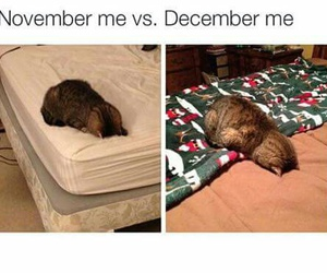 cat, funny, and december image