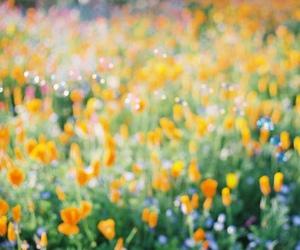 Image by hitsuji