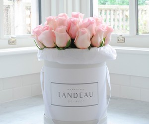 roses, pink, and flowers image