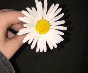 beautiful, cool, and daisy image