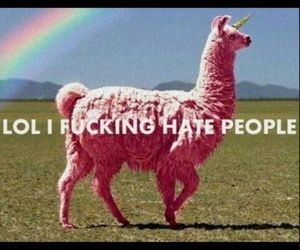 pink, rainbow, and unicorn image